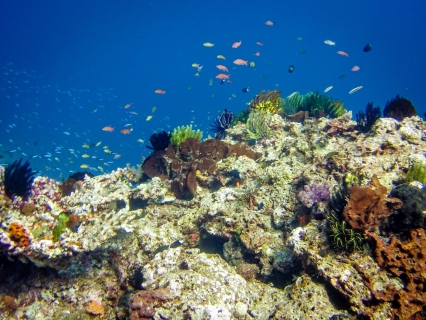 Go diving in East Timor