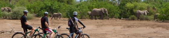 Cycle Safari at Mashatu game reserve