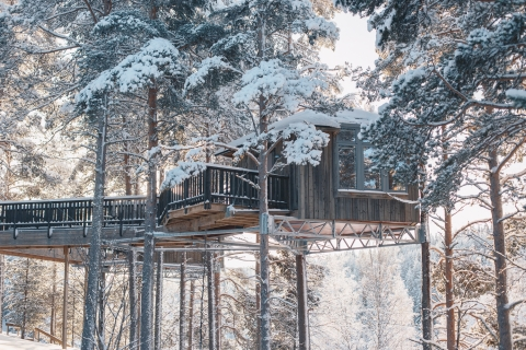 Sleep among the trees in Sweden