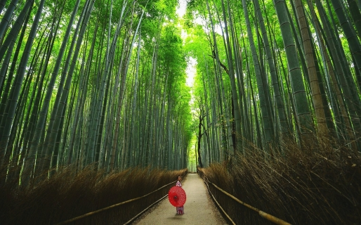 The famous bamboo forests of Arashiyama