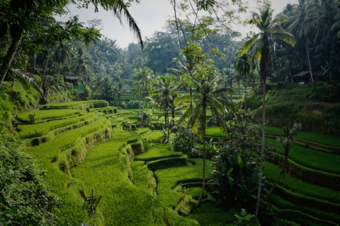 The ultimate guide to Ubud – everything you need to know to escape the crowds